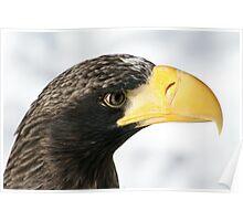 Steller's Sea Eagle  Poster