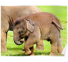 Stomping Baby Elephant Poster