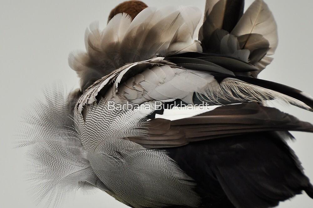 Duck Down - Feather Detail by Barbara Burkhardt
