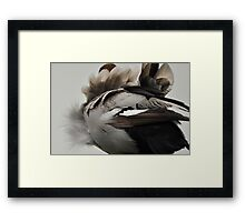 Duck Down - Feather Detail Framed Print