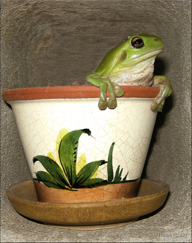 potted tree frog by Helenvandy