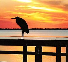 Late Evening Roost by Larry Trupp