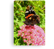 Red Admiral under wing detail Canvas Print