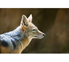 Day of the Jackal Photographic Print