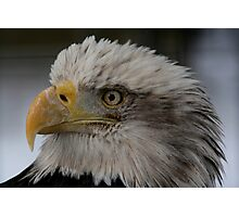 The Bald Eagle Photographic Print