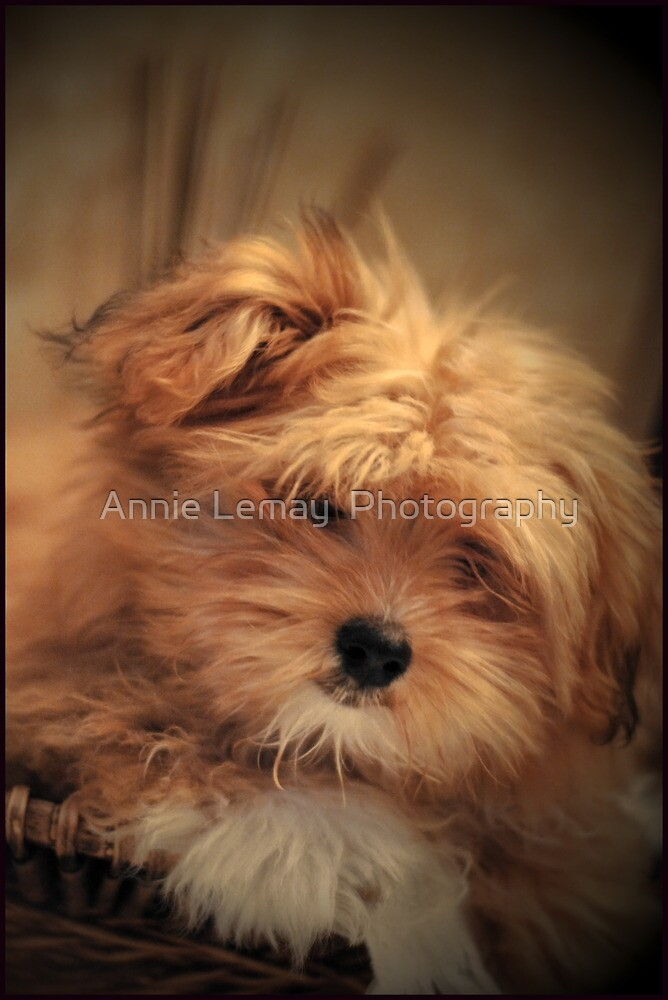 Puppy Love by Annie Lemay  Photography