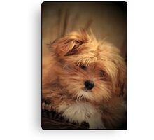 Puppy Love Canvas Print