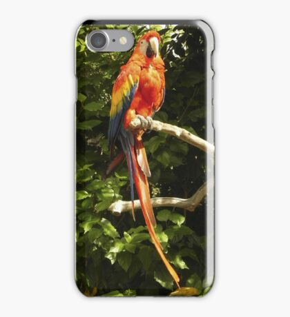 Scarlet Macaw iPhone Case/Skin