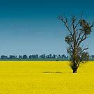 A field of gold by Mark Elshout