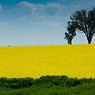 A field of gold #2 by Mark Elshout