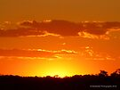 Orange Crush - Sunset by Barberelli