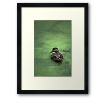 Water Foul Framed Print