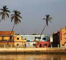 Tilted Palms in St. Louis, Senegal by helenlloyd