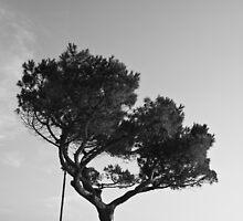 Lonely Tree,Riomaggiore,Italy. by Davide Ferrari