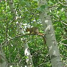Idahoan Squirrel I by thyjoss