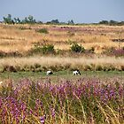 Fields of Purple and Gold - Fouta Djalon, Guinea by helenlloyd