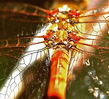 Sparckles of light on the wings of a Dragon by Lee Van Hallam