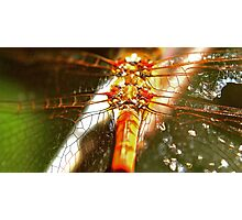 Sparckles of light on the wings of a Dragon Photographic Print