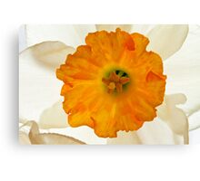 Daffodil Flower Canvas Print