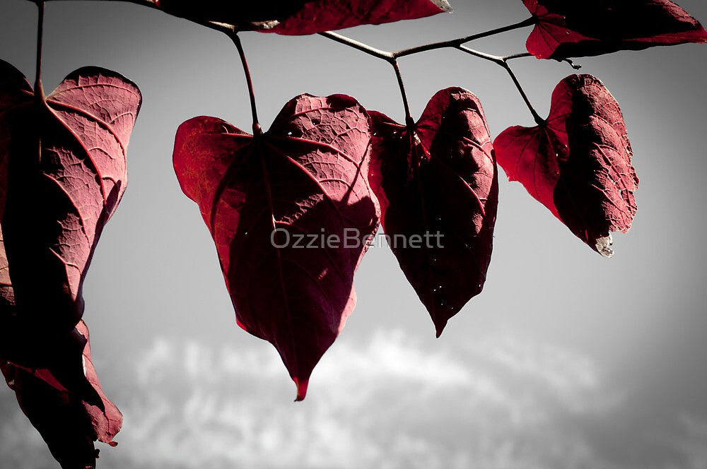 Our Love Grows Old (J.G. 5) by OzzieBennett