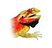 bearded dragon watercolour Photographic Print