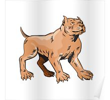 Pitbull Dog Mongrel Standing Etching Poster