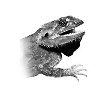 bearded dragons  Photographic Print