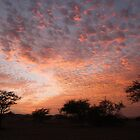 Pink Clouds of Africa - sunset, Mauritania by helenlloyd