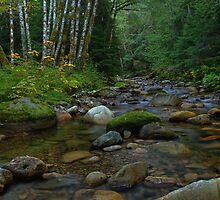 Autumn on the Creek by Doug Keech