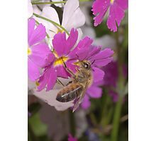 Bee flower Photographic Print