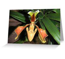 Peach paphiopedilium Greeting Card