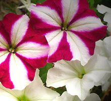 Garden flowers by Maria1606