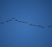 Migration by Roxanne Persson