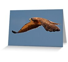 0925101 Swainson's Hawk Greeting Card
