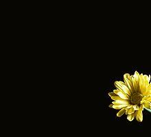 Simplicity by Lynne Morris