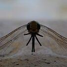dragonfly photo 1 by Raina DeVaney