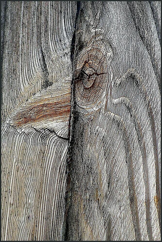 Has Anybody Seen The Dodo Bird? by paintingsheep