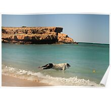 Louie can fly - Warroora Station, Maggies Beach WA Australia Poster