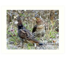 Lets do the Partridge Dance! Art Print