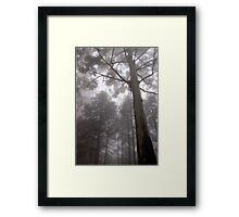 "IN ""MEMORY LANE"" - A BLUE-GUM TREE in the mist Framed Print"