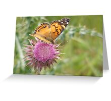 Butterfly on Musk Thistle Greeting Card