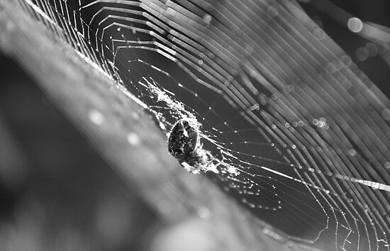 sunlit spider web late afternoon by blueandwhite80