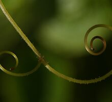 how curly is my mustache? by Fran E.
