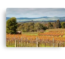 Autumn Vines of the Barossa Canvas Print