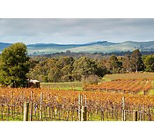 Autumn Vines of the Barossa Photographic Print