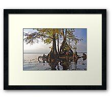 Surreal Cypress Framed Print