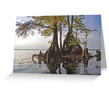 Surreal Cypress Greeting Card