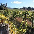 Upper Vineyard at Summerhill Pyramid Winery by Gregory Ewanowich