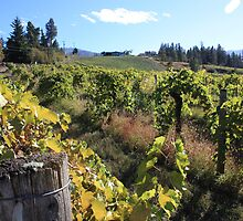 Upper Vineyard at Summerhill Pyramid Winery by Gregory Ewanowich