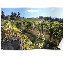 Upper Vineyard at Summerhill Pyramid Winery Poster